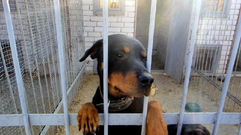 Бездомные животные вМогилёве, кто виноват?