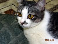 Уникальный шанс найти себе верного друга предоставляет горожанам Могилёвское общество защиты животных «Доброе сердце»