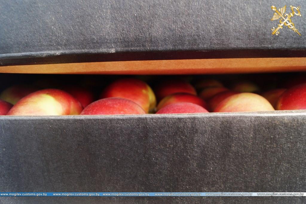 Могилёвские таможенники задержали 22тонны нелегальных яблок