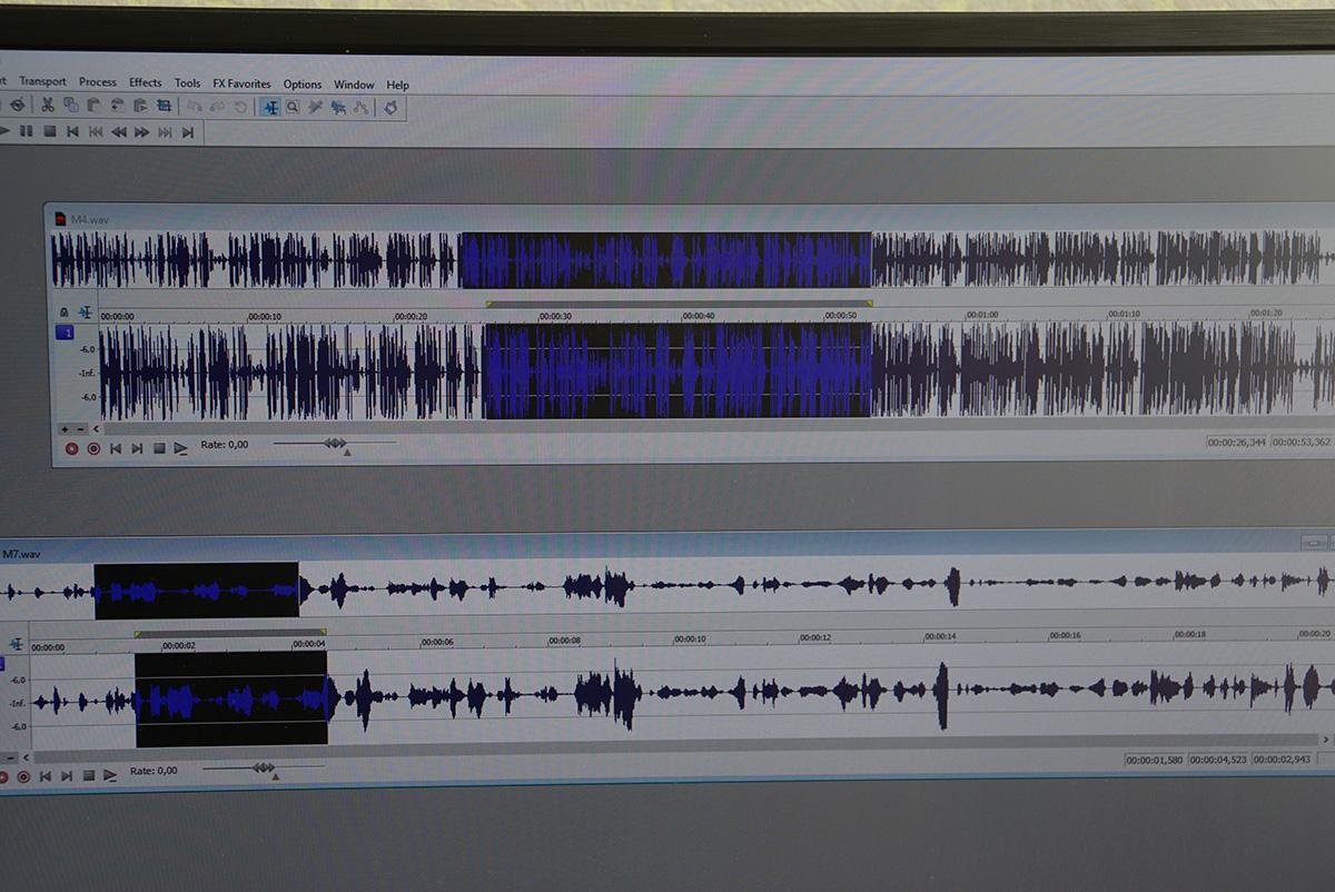 Умение слушать ислышать: как проводят фоноскопические исследования могилевские эксперты