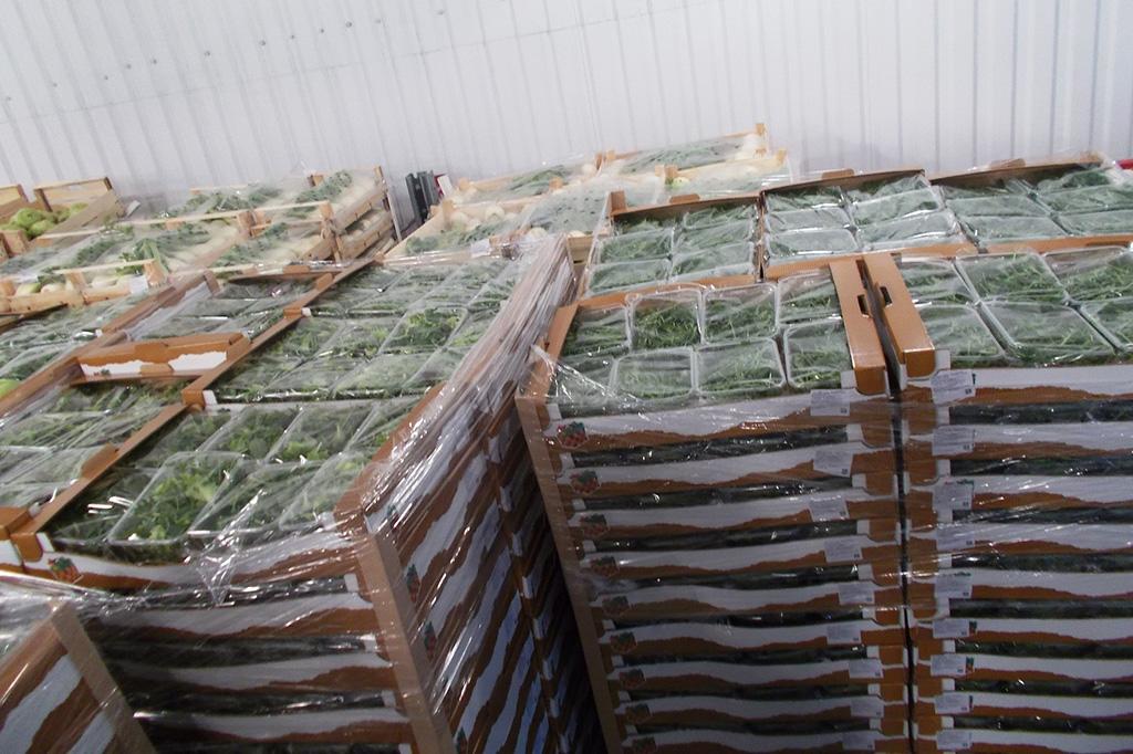 27тонн незаконно перевозимых овощей ифруктов задержала Могилёвская таможня
