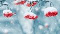 Метель и+1°С— погодный парадокс ждёт могилевчан впредстоящие выходные