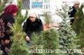 В Могилёве будет работать 21 ёлочный базар