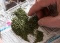 Ряд «наркотических» уголовных дел возбудили в Могилёве