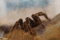 Выставка экзотических насекомых начала работу вмузее этнографии Могилёва