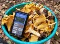 86 проб грибов проверили на радиацию. Из них 12% превысили допустимые нормы