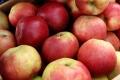 Партию нелегальных яблок задержала Могилёвская таможня