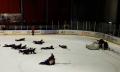 Могилевские «львы» завершили регулярный сезон домашней викторией над лидскими «рыцарями»