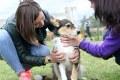 Собаки, байкеры и «Доброе сердце»: в субботу прошёл субботник в собачьих вольерах
