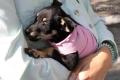 10 000 животных за 10 лет пристроили волонтёры Могилёвского общества защиты животных