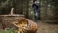 Напоиски пропавших: заодин день вМогилёвской области заблудились 7человек