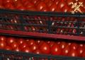 Более 21т помидоров пытался незаконно вывезти российский субъект хозяйствования изБеларуси