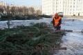 4главных ёлки Могилёва смонтируют к10декабря
