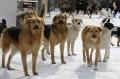 История расстрелянных на ферме собак. Милиция провела проверку по факту жестокого обращения с животными