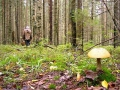 Могилевчане ищут в лесу грибы, могилевчан в лесу ищет милиция