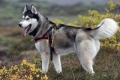 В Могилёве участковый инспектор раскрыл кражу собаки по «горячим следам»
