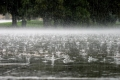 Могилёвоблгидромет: к концу недели станет теплее, но ожидаются дожди и грозы