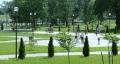 Из соображений безопасности: склон в Подникольском парке в Могилёве «обрастёт» можжевельником
